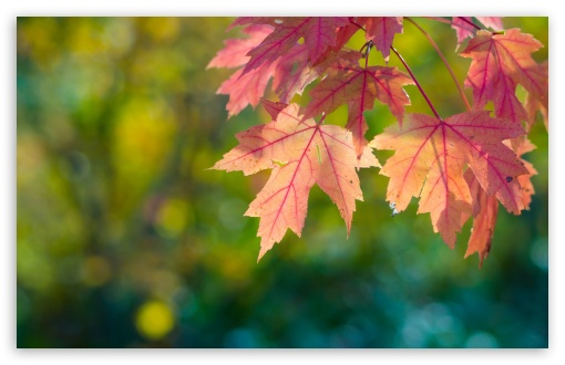 Fall, Sun, Leaves And Bokeh HD wallpaper for Wide 16:10 5:3 Widescreen WHXGA WQXGA WUXGA WXGA WGA ; HD 16:9 High Definition WQHD QWXGA 1080p 900p 720p QHD nHD ; UHD 16:9 WQHD QWXGA 1080p 900p 720p QHD nHD ; Standard 4:3 5:4 3:2 Fullscreen UXGA XGA SVGA QSXGA SXGA DVGA HVGA HQVGA devices ( Apple PowerBook G4 iPhone 4 3G 3GS iPod Touch ) ; Tablet 1:1 ; iPad 1/2/Mini ; Mobile 4:3 5:3 3:2 16:9 5:4 - UXGA XGA SVGA WGA DVGA HVGA HQVGA devices ( Apple PowerBook G4 iPhone 4 3G 3GS iPod Touch ) WQHD QWXGA 1080p 900p 720p QHD nHD QSXGA SXGA ; Dual 5:4 QSXGA SXGA ;
