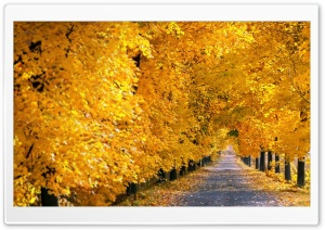 Fall Tree Pathway HD Wide Wallpaper for 4K UHD Widescreen desktop & smartphone