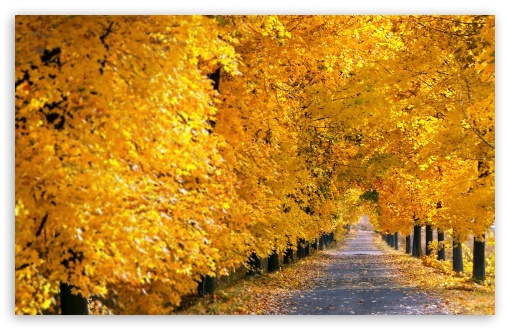 Fall Tree Pathway HD wallpaper for Wide 16:10 5:3 Widescreen WHXGA WQXGA WUXGA WXGA WGA ; HD 16:9 High Definition WQHD QWXGA 1080p 900p 720p QHD nHD ; Standard 4:3 5:4 3:2 Fullscreen UXGA XGA SVGA QSXGA SXGA DVGA HVGA HQVGA devices ( Apple PowerBook G4 iPhone 4 3G 3GS iPod Touch ) ; Tablet 1:1 ; iPad 1/2/Mini ; Mobile 4:3 5:3 3:2 16:9 5:4 - UXGA XGA SVGA WGA DVGA HVGA HQVGA devices ( Apple PowerBook G4 iPhone 4 3G 3GS iPod Touch ) WQHD QWXGA 1080p 900p 720p QHD nHD QSXGA SXGA ;