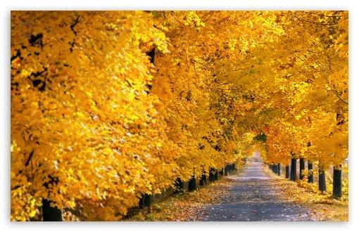 Download Fall Tree Pathway UltraHD Wallpaper