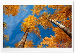 Fall Trees HD Wide Wallpaper for Widescreen