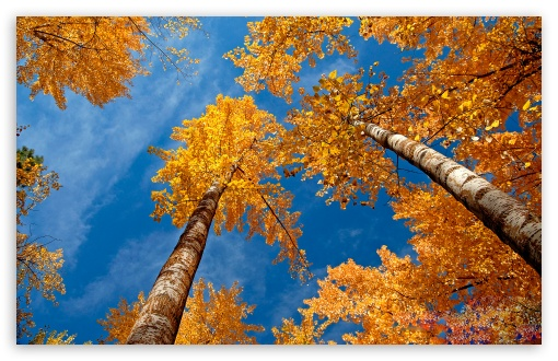 Fall Trees HD wallpaper for Wide 16:10 5:3 Widescreen WHXGA WQXGA WUXGA WXGA WGA ; HD 16:9 High Definition WQHD QWXGA 1080p 900p 720p QHD nHD ; Standard 4:3 5:4 3:2 Fullscreen UXGA XGA SVGA QSXGA SXGA DVGA HVGA HQVGA devices ( Apple PowerBook G4 iPhone 4 3G 3GS iPod Touch ) ; Tablet 1:1 ; iPad 1/2/Mini ; Mobile 4:3 5:3 3:2 16:9 5:4 - UXGA XGA SVGA WGA DVGA HVGA HQVGA devices ( Apple PowerBook G4 iPhone 4 3G 3GS iPod Touch ) WQHD QWXGA 1080p 900p 720p QHD nHD QSXGA SXGA ;