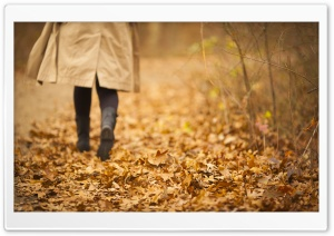 Fall Walk HD Wide Wallpaper for Widescreen