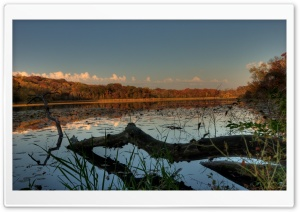 Fallen - Jensen Lake, Lebanon Hills Park, Eagan, Minnesota HD Wide Wallpaper for Widescreen
