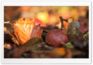 Fallen Apple Autumn HD Wide Wallpaper for Widescreen
