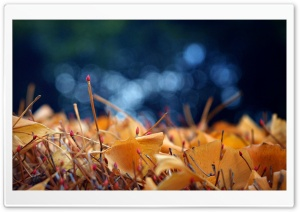Fallen Autumn Leaves HD Wide Wallpaper for Widescreen
