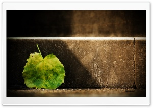 Fallen Leaf HD Wide Wallpaper for Widescreen