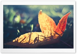 Fallen Leaf Bokeh HD Wide Wallpaper for Widescreen