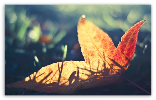 Fallen Leaf Bokeh ❤ 4K UHD Wallpaper for Wide 16:10 5:3 Widescreen WHXGA WQXGA WUXGA WXGA WGA ; 4K UHD 16:9 Ultra High Definition 2160p 1440p 1080p 900p 720p ; Standard 4:3 5:4 3:2 Fullscreen UXGA XGA SVGA QSXGA SXGA DVGA HVGA HQVGA ( Apple PowerBook G4 iPhone 4 3G 3GS iPod Touch ) ; iPad 1/2/Mini ; Mobile 4:3 5:3 3:2 16:9 5:4 - UXGA XGA SVGA WGA DVGA HVGA HQVGA ( Apple PowerBook G4 iPhone 4 3G 3GS iPod Touch ) 2160p 1440p 1080p 900p 720p QSXGA SXGA ;