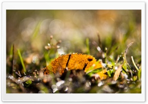 Fallen Leaf, Bokeh HD Wide Wallpaper for Widescreen