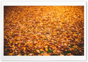Fallen Leaves HD Wide Wallpaper for 4K UHD Widescreen desktop & smartphone