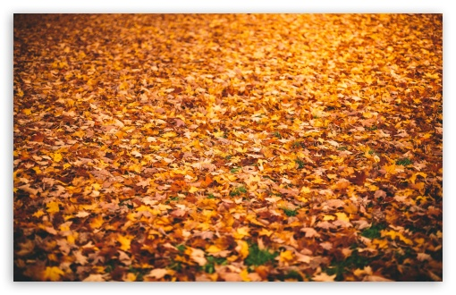 Fallen Leaves ❤ 4K UHD Wallpaper for Wide 16:10 5:3 Widescreen WHXGA WQXGA WUXGA WXGA WGA ; 4K UHD 16:9 Ultra High Definition 2160p 1440p 1080p 900p 720p ; UHD 16:9 2160p 1440p 1080p 900p 720p ; Standard 4:3 5:4 3:2 Fullscreen UXGA XGA SVGA QSXGA SXGA DVGA HVGA HQVGA ( Apple PowerBook G4 iPhone 4 3G 3GS iPod Touch ) ; Smartphone 5:3 WGA ; Tablet 1:1 ; iPad 1/2/Mini ; Mobile 4:3 5:3 3:2 16:9 5:4 - UXGA XGA SVGA WGA DVGA HVGA HQVGA ( Apple PowerBook G4 iPhone 4 3G 3GS iPod Touch ) 2160p 1440p 1080p 900p 720p QSXGA SXGA ; Dual 16:10 5:3 16:9 4:3 5:4 WHXGA WQXGA WUXGA WXGA WGA 2160p 1440p 1080p 900p 720p UXGA XGA SVGA QSXGA SXGA ;