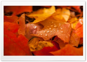 Fallen Leaves HD Wide Wallpaper for Widescreen