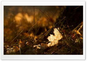 Fallen Leaves, Autumn HD Wide Wallpaper for Widescreen