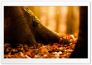 Fallen Leaves Covering The Ground HD Wide Wallpaper for 4K UHD Widescreen desktop & smartphone