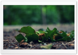 Fallen Leaves, Macro HD Wide Wallpaper for Widescreen