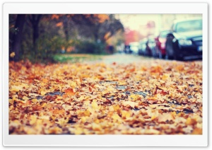 Fallen Leaves On The Sidewalk HD Wide Wallpaper for Widescreen