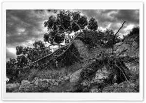 Fallen Tree HD Wide Wallpaper for Widescreen