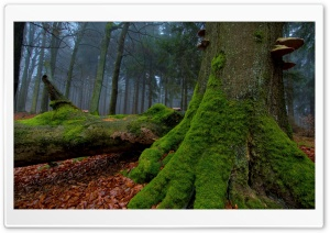 Fallen Tree In The Forest HD Wide Wallpaper for Widescreen