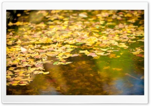 Falling Leaves HD Wide Wallpaper for Widescreen