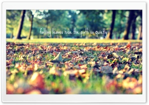 Falling Leaves Hide The Path So Quietly HD Wide Wallpaper for Widescreen