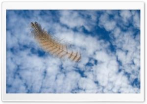 Falling Owl Feather HD Wide Wallpaper for Widescreen