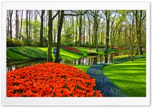 Famous Tulip Garden in Holland HD Wide Wallpaper for 4K UHD Widescreen desktop & smartphone