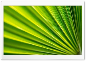 Fan Leaf Ultra HD Wallpaper for 4K UHD Widescreen desktop, tablet & smartphone