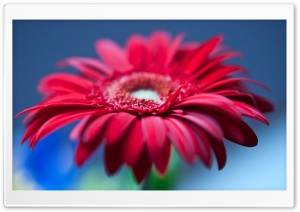 Father's Day Flowers HD Wide Wallpaper for Widescreen