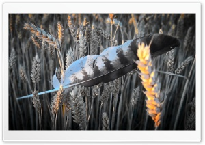 Feather in Field HD Wide Wallpaper for 4K UHD Widescreen desktop & smartphone