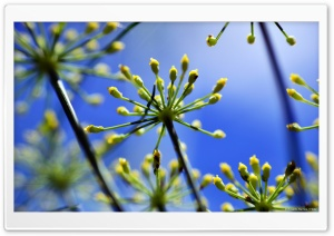 Fennel 1 HD Wide Wallpaper for Widescreen