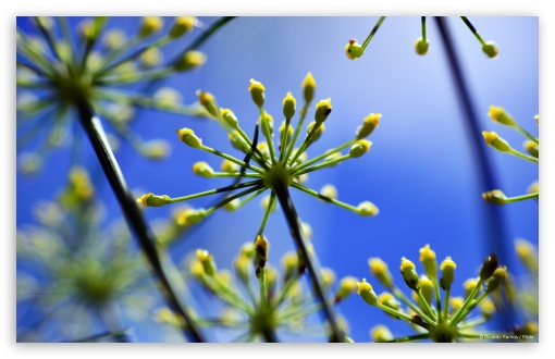Fennel 1 ❤ 4K UHD Wallpaper for Wide 16:10 5:3 Widescreen WHXGA WQXGA WUXGA WXGA WGA ; 4K UHD 16:9 Ultra High Definition 2160p 1440p 1080p 900p 720p ; Standard 4:3 5:4 3:2 Fullscreen UXGA XGA SVGA QSXGA SXGA DVGA HVGA HQVGA ( Apple PowerBook G4 iPhone 4 3G 3GS iPod Touch ) ; Tablet 1:1 ; iPad 1/2/Mini ; Mobile 4:3 5:3 3:2 16:9 5:4 - UXGA XGA SVGA WGA DVGA HVGA HQVGA ( Apple PowerBook G4 iPhone 4 3G 3GS iPod Touch ) 2160p 1440p 1080p 900p 720p QSXGA SXGA ;