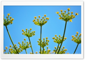 Fennel 2 HD Wide Wallpaper for Widescreen