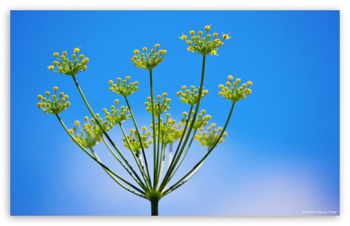Fennel 3 HD wallpaper for Wide 16:10 5:3 Widescreen WHXGA WQXGA WUXGA WXGA WGA ; HD 16:9 High Definition WQHD QWXGA 1080p 900p 720p QHD nHD ; Standard 3:2 Fullscreen DVGA HVGA HQVGA devices ( Apple PowerBook G4 iPhone 4 3G 3GS iPod Touch ) ; Tablet 1:1 ; Mobile 5:3 3:2 16:9 - WGA DVGA HVGA HQVGA devices ( Apple PowerBook G4 iPhone 4 3G 3GS iPod Touch ) WQHD QWXGA 1080p 900p 720p QHD nHD ;