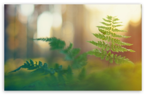 Fern ❤ 4K UHD Wallpaper for Wide 16:10 5:3 Widescreen WHXGA WQXGA WUXGA WXGA WGA ; 4K UHD 16:9 Ultra High Definition 2160p 1440p 1080p 900p 720p ; Standard 4:3 5:4 3:2 Fullscreen UXGA XGA SVGA QSXGA SXGA DVGA HVGA HQVGA ( Apple PowerBook G4 iPhone 4 3G 3GS iPod Touch ) ; Tablet 1:1 ; iPad 1/2/Mini ; Mobile 4:3 5:3 3:2 16:9 5:4 - UXGA XGA SVGA WGA DVGA HVGA HQVGA ( Apple PowerBook G4 iPhone 4 3G 3GS iPod Touch ) 2160p 1440p 1080p 900p 720p QSXGA SXGA ;