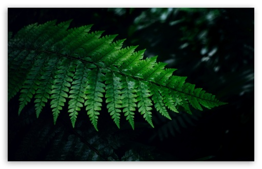 Fern ❤ 4K UHD Wallpaper for Wide 16:10 5:3 Widescreen WHXGA WQXGA WUXGA WXGA WGA ; 4K UHD 16:9 Ultra High Definition 2160p 1440p 1080p 900p 720p ; Standard 4:3 5:4 3:2 Fullscreen UXGA XGA SVGA QSXGA SXGA DVGA HVGA HQVGA ( Apple PowerBook G4 iPhone 4 3G 3GS iPod Touch ) ; iPad 1/2/Mini ; Mobile 4:3 5:3 3:2 16:9 5:4 - UXGA XGA SVGA WGA DVGA HVGA HQVGA ( Apple PowerBook G4 iPhone 4 3G 3GS iPod Touch ) 2160p 1440p 1080p 900p 720p QSXGA SXGA ;