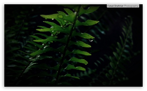Fern HD wallpaper for Wide 5:3 Widescreen WGA ; HD 16:9 High Definition WQHD QWXGA 1080p 900p 720p QHD nHD ; Mobile 5:3 16:9 - WGA WQHD QWXGA 1080p 900p 720p QHD nHD ;