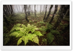 Fern, Deciduous Forest, Trees, Autumn Fog HD Wide Wallpaper for 4K UHD Widescreen desktop & smartphone