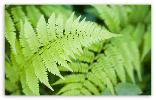 Ferns HD wallpaper for Wide 16:10 5:3 Widescreen WHXGA WQXGA WUXGA WXGA WGA ; HD 16:9 High Definition WQHD QWXGA 1080p 900p 720p QHD nHD ; Standard 4:3 5:4 3:2 Fullscreen UXGA XGA SVGA QSXGA SXGA DVGA HVGA HQVGA devices ( Apple PowerBook G4 iPhone 4 3G 3GS iPod Touch ) ; Tablet 1:1 ; iPad 1/2/Mini ; Mobile 4:3 5:3 3:2 16:9 5:4 - UXGA XGA SVGA WGA DVGA HVGA HQVGA devices ( Apple PowerBook G4 iPhone 4 3G 3GS iPod Touch ) WQHD QWXGA 1080p 900p 720p QHD nHD QSXGA SXGA ;