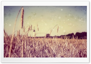 Field Bokeh HD Wide Wallpaper for Widescreen