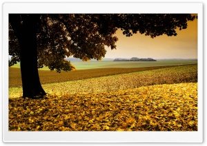 Field Covered In Yellow Leaves HD Wide Wallpaper for Widescreen