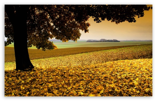 Field Covered In Yellow Leaves HD wallpaper for Wide 16:10 5:3 Widescreen WHXGA WQXGA WUXGA WXGA WGA ; HD 16:9 High Definition WQHD QWXGA 1080p 900p 720p QHD nHD ; UHD 16:9 WQHD QWXGA 1080p 900p 720p QHD nHD ; Standard 4:3 5:4 Fullscreen UXGA XGA SVGA QSXGA SXGA ; MS 3:2 DVGA HVGA HQVGA devices ( Apple PowerBook G4 iPhone 4 3G 3GS iPod Touch ) ; Mobile VGA WVGA iPhone iPad PSP Phone - VGA QVGA Smartphone ( PocketPC GPS iPod Zune BlackBerry HTC Samsung LG Nokia Eten Asus ) WVGA WQVGA Smartphone ( HTC Samsung Sony Ericsson LG Vertu MIO ) HVGA Smartphone ( Apple iPhone iPod BlackBerry HTC Samsung Nokia ) Sony PSP Zune HD Zen ; Tablet 1&2 Android Retina ; Dual 5:4 QSXGA SXGA ;