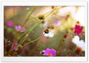 Field Flowers, Summer HD Wide Wallpaper for 4K UHD Widescreen desktop & smartphone