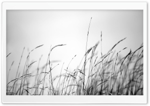 Field Grass HD Wide Wallpaper for Widescreen