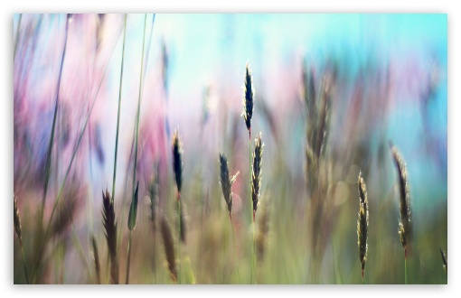 Field Grass ❤ 4K UHD Wallpaper for Wide 16:10 5:3 Widescreen WHXGA WQXGA WUXGA WXGA WGA ; 4K UHD 16:9 Ultra High Definition 2160p 1440p 1080p 900p 720p ; Standard 4:3 5:4 3:2 Fullscreen UXGA XGA SVGA QSXGA SXGA DVGA HVGA HQVGA ( Apple PowerBook G4 iPhone 4 3G 3GS iPod Touch ) ; Tablet 1:1 ; iPad 1/2/Mini ; Mobile 4:3 5:3 3:2 16:9 5:4 - UXGA XGA SVGA WGA DVGA HVGA HQVGA ( Apple PowerBook G4 iPhone 4 3G 3GS iPod Touch ) 2160p 1440p 1080p 900p 720p QSXGA SXGA ;