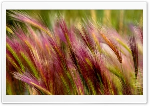 Field Grass Close Up HD Wide Wallpaper for Widescreen