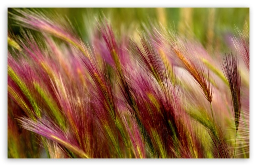Field Grass Close Up HD wallpaper for Wide 16:10 5:3 Widescreen WHXGA WQXGA WUXGA WXGA WGA ; HD 16:9 High Definition WQHD QWXGA 1080p 900p 720p QHD nHD ; Standard 4:3 5:4 3:2 Fullscreen UXGA XGA SVGA QSXGA SXGA DVGA HVGA HQVGA devices ( Apple PowerBook G4 iPhone 4 3G 3GS iPod Touch ) ; Tablet 1:1 ; iPad 1/2/Mini ; Mobile 4:3 5:3 3:2 16:9 5:4 - UXGA XGA SVGA WGA DVGA HVGA HQVGA devices ( Apple PowerBook G4 iPhone 4 3G 3GS iPod Touch ) WQHD QWXGA 1080p 900p 720p QHD nHD QSXGA SXGA ;