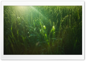 Field Green Grass HD Wide Wallpaper for 4K UHD Widescreen desktop & smartphone
