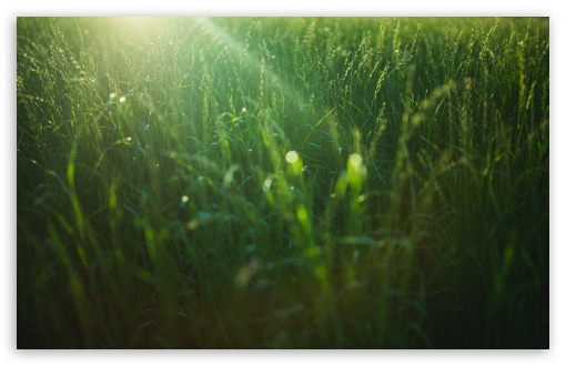 Field Green Grass ❤ 4K UHD Wallpaper for Wide 16:10 5:3 Widescreen WHXGA WQXGA WUXGA WXGA WGA ; 4K UHD 16:9 Ultra High Definition 2160p 1440p 1080p 900p 720p ; UHD 16:9 2160p 1440p 1080p 900p 720p ; Standard 4:3 5:4 3:2 Fullscreen UXGA XGA SVGA QSXGA SXGA DVGA HVGA HQVGA ( Apple PowerBook G4 iPhone 4 3G 3GS iPod Touch ) ; Smartphone 5:3 WGA ; Tablet 1:1 ; iPad 1/2/Mini ; Mobile 4:3 5:3 3:2 16:9 5:4 - UXGA XGA SVGA WGA DVGA HVGA HQVGA ( Apple PowerBook G4 iPhone 4 3G 3GS iPod Touch ) 2160p 1440p 1080p 900p 720p QSXGA SXGA ;