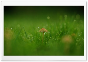 Field Mushroom HD Wide Wallpaper for Widescreen